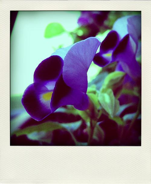 flowers-polasm