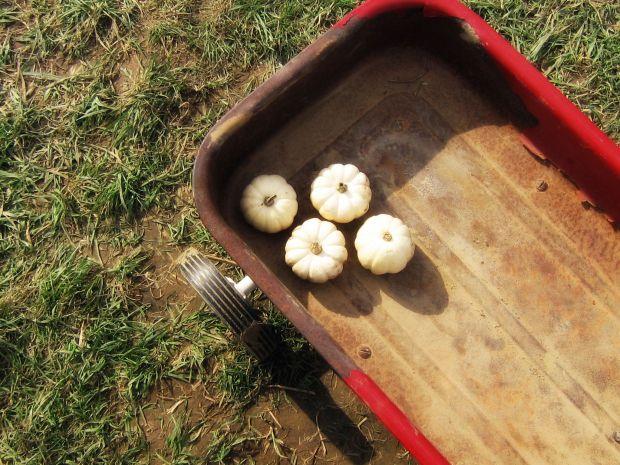 littlewhitepumpkins