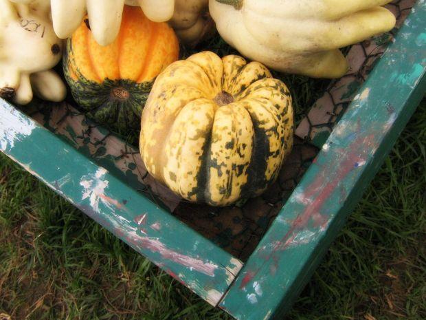 pumpkinbin