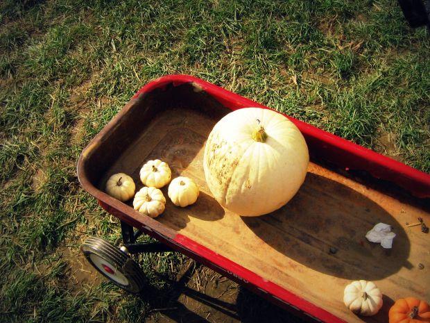 pumpkinsearch